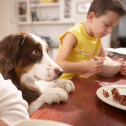 A family dog rests on the breakfast table surrounded by other members of the family illustrating the family behind brain injury claim headlines