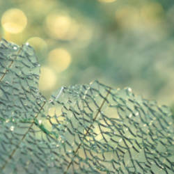 Shattered glass from a car windscreen illustrating a criminal injuries compensation scheme claim as a result of a pedestrian being struck by a car