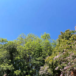 A blue sky above a garden illustrating the importance of mental health within caregivers